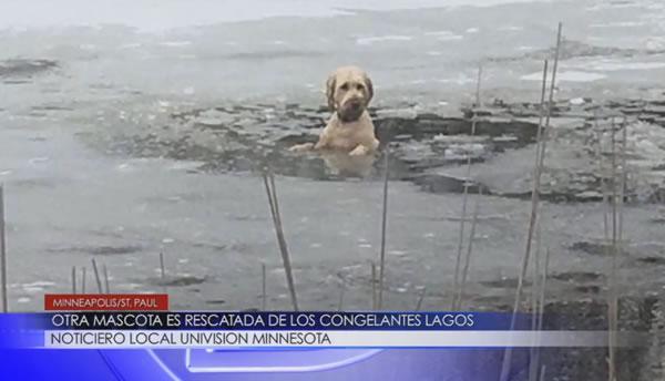 mascota-rescatada
